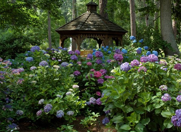 Whether You Want A Low Maintenance Garden Or Add Color And Appeal To A  Group Of Trees In Your Yard A Woodland Garden Is A Great Solution For  Beautiful And ...