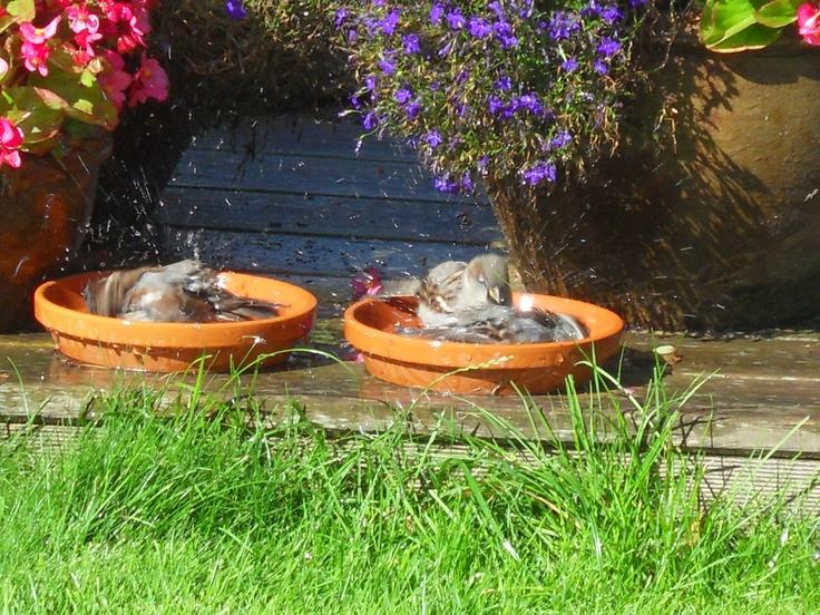 badderende musjes