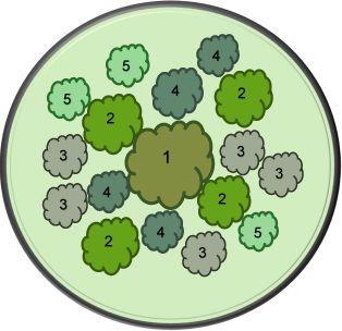 где 1 - липа; 2 - папоротник; 3 - бруннера; 4 - хоста высокорослая (например, Блу Энжел); 5 - хоста низкорослая (например, Анна Кульпа).