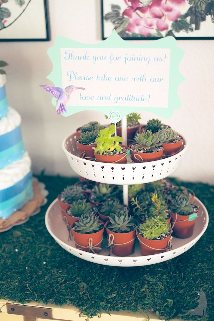 baby boy shower, baby shower, diy baby shower, mason jar decorations, moss decorations, secret garden, succulent party favors