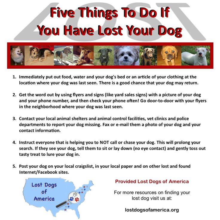 98 best Missing Pet Tips images on Pinterest Caramel, Clip art - lost dog flyer examples