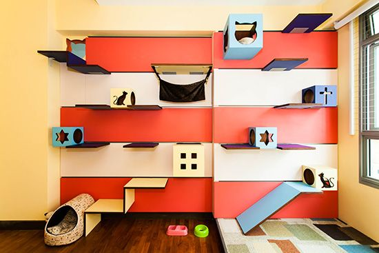 Designer cat climbing shelves, Catification, Interior Design, climbing wall for cats