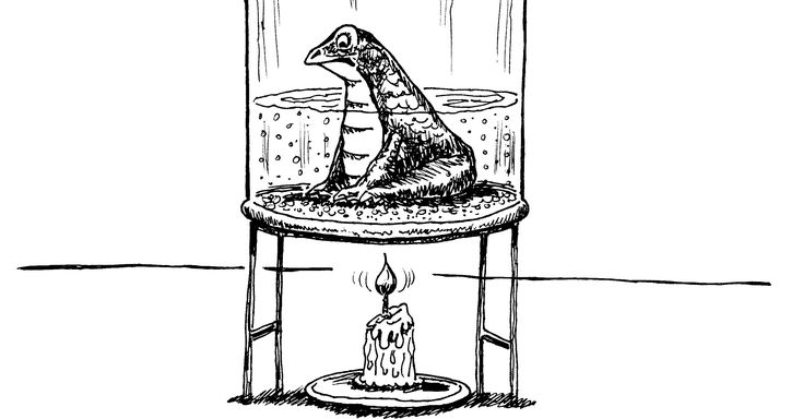 Systems thinkers have given us a useful metaphor for a certain kind of human behavior in the phenomenon of the boiled frog.  The phenomenon is this. If you drop a frog in a pot of boiling water...