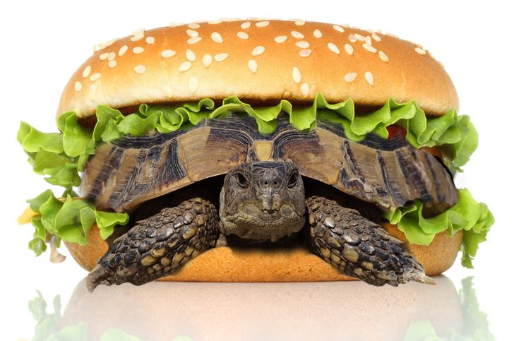 A man tried to smuggle his pet turtle through the Guangzhou Baiyun International Airport disguised as a hamburger.