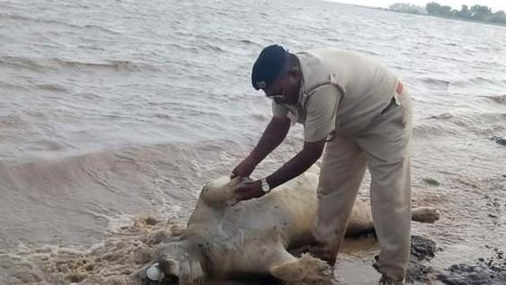 Floods in India's western Gujarat state in June claimed the lives of ten endangered Asiatic lions