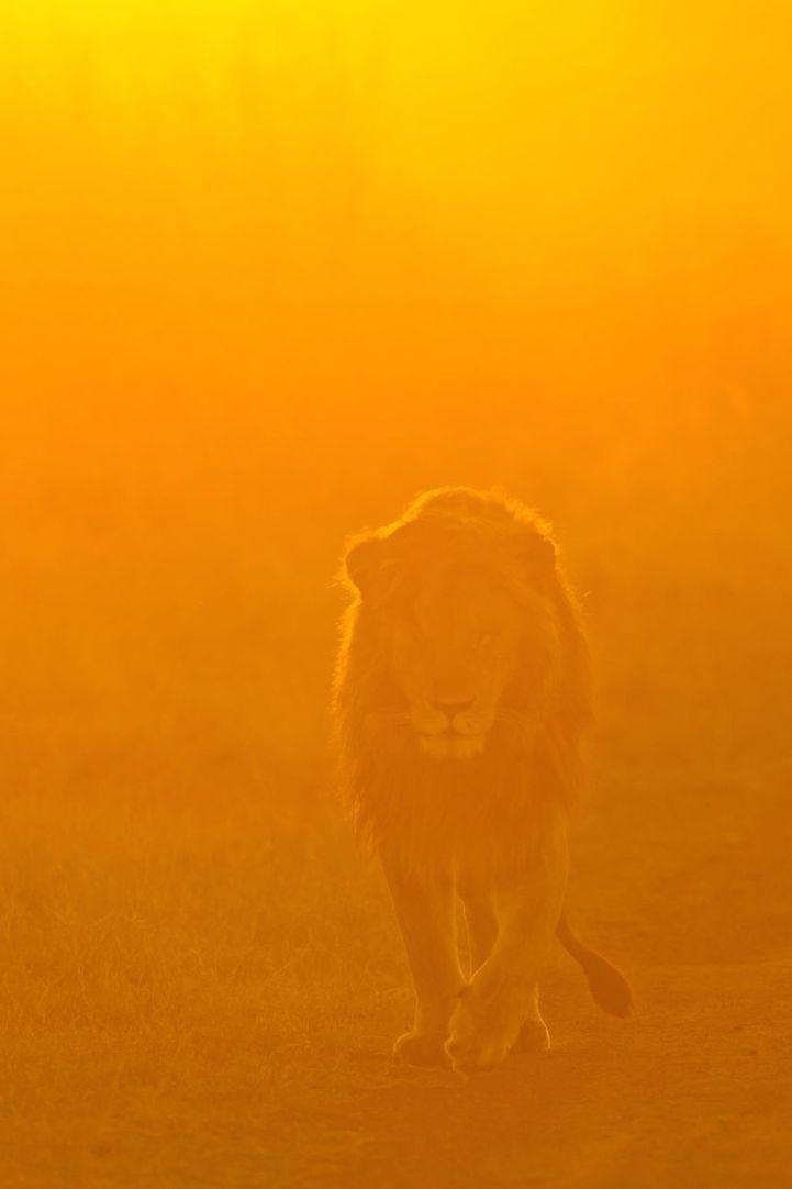 Stunning Photos of Masai Mara, Kenya at Sunrise and Sunset - My Modern Met