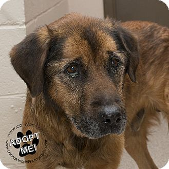 URGENT! I am at a very full, high kill shelter in Troy, OH - Shepherd (Unknown Type) Mix. Meet Floyd, a dog for adoption. http://www.adoptapet.com/pet/17072440-troy-ohio-shepherd-unknown-type-mix
