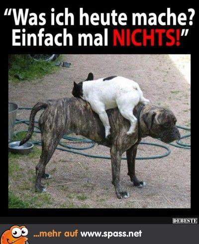 Tiere - Lustige Bilder auf Spass.net | Tierbilder | Funny ...