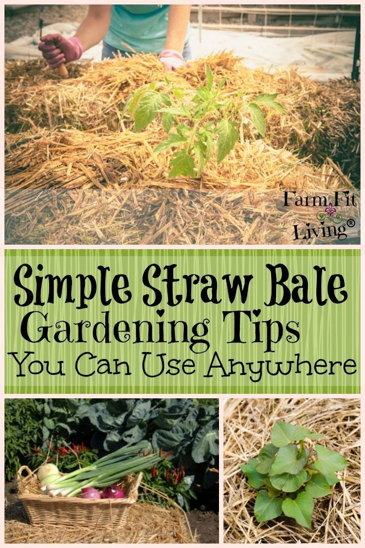 Simple Straw Bale Gardening Tips You Can Use Anywhere Straw Bale