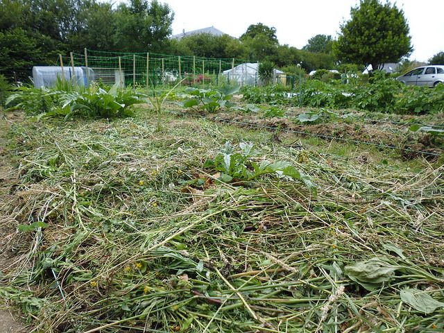 The Oft-Forgotten Art of Growing Mulch - The Permaculture Research Institute