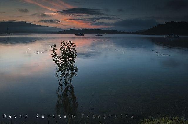 El arbusto | Flickr: Intercambio de fotos