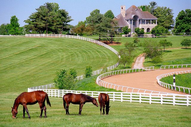 Lexington Kentucky - Donamire Farm- Don Ball's House in the Background - This farm is down the road from my sister's house.  This is one of my favorite farms!
