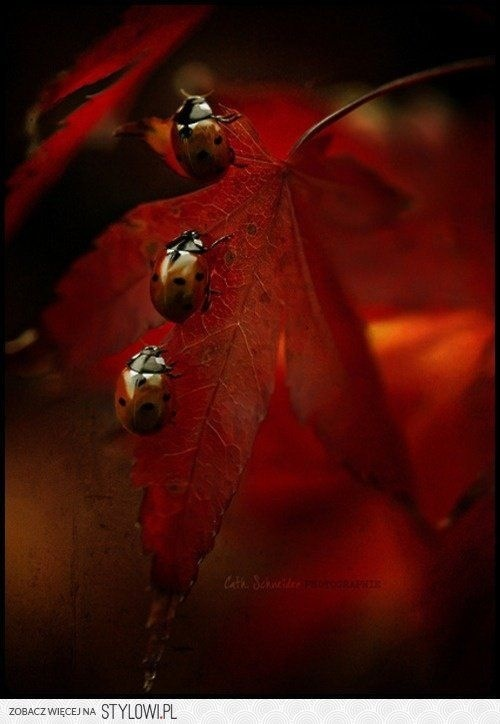 Lady With Birds >> Lady birds on an autumn leaf | Beautiful | Pinterest | Autumn, Bird and Animal