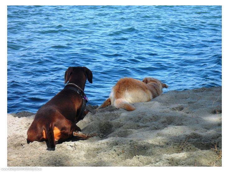 Club Village & Hotel Spiaggia Romea  #kutya #strand #kutyabarát #szállás #Olaszország #utazás #kutyabaráthelyek