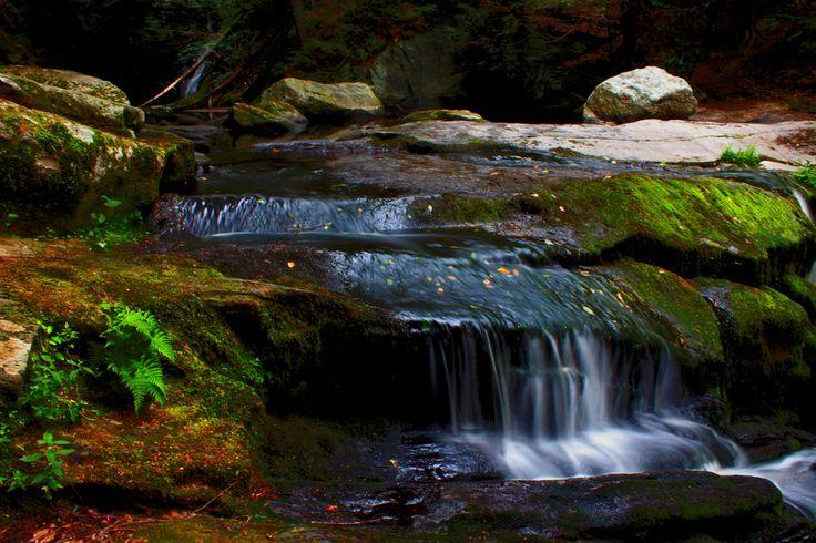 Ender's Forrest, Granby, Connecticut
