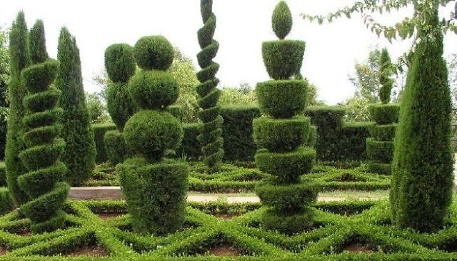 Figuras con arbustos poda ornamental o poda topiaria for O jardins d eglantine