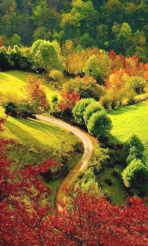 A travers les feuillages d'automne