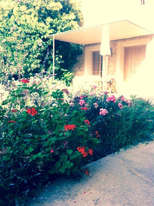 The #flowers at the #entrance of the #Kyriakos #villa #garden