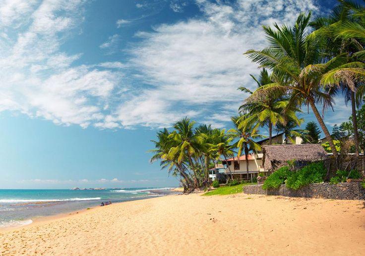 Narigama Beach i Hikkaduwa i Sri Lanka har den helt rigtige gyldne farve og masser af palmer - måske ser du en af de havskildpadder, der jævnligt besøger stranden.
