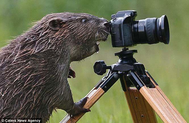 Αστεία ζώα που θέλουν να γίνουν φωτογράφοι | Otherside.gr (15)