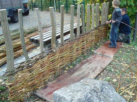 Die gewässerten Weidenruten wurden vorne- hinten - vorne - hinten um die Akazienpflöcke geflochten. War eine Rute zu Ende kam die nächste d...