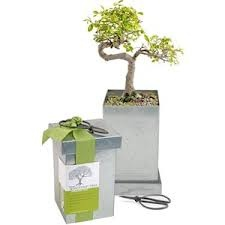 Bonsai Tree-Planting Kit