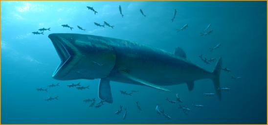 The giant Jurassic fish Leedsichthys, that lived 165 million years ago, was the biggest fish ever to swim in the sea, growing to 54 feet