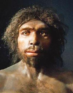 El Homo antecessor es una especie extinta perteneciente al género Homo. Es considerada la especie homínida más antigua de Europa y probable ancestro de la línea Homo heildelbergensis. Vivió hace unos 900000 años en Calabriense. Eran individuos altos y fuertes, con rasgos arcaicos y cerebro más pequeño que el del hombre actual.