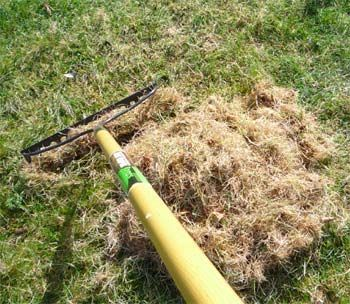 Get rid of thatch forever! Thatch buildup is the symptom of a serious problem, not the cause of it (the cause is over-fertilization, too much water and shallow roots). Instead of dethatching, solve the underlying problem by cutting way back on nitrogen fertilizer. Next, rent a core aerator and run it across your lawn. Then apply a product such as Natural Guard Soil Activator. The soil activator literally composts the existing thatch and turns it into useful nutrients for your lawn.