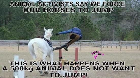 Animal activists say we make our horses jump...