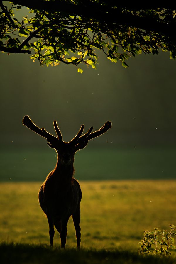 Backlit by Simon Roy