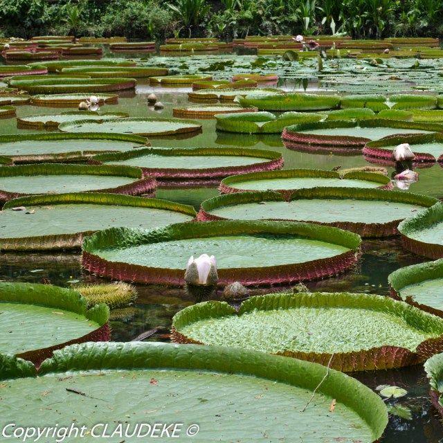 Botanic garden Singapore  © CLAUDEKE www.claudeke.com