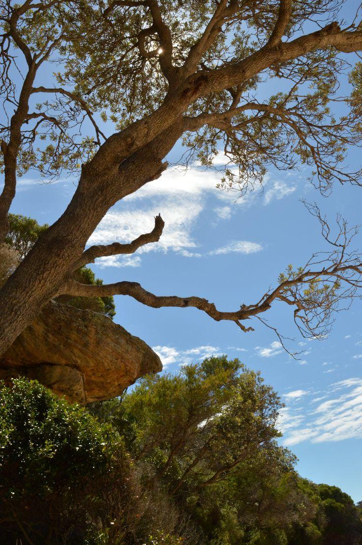 Wattamolla - NSW - Australia