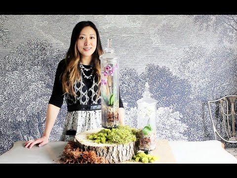 How to make an Orchid Terrarium | DiY Orchid Terrarium - YouTube