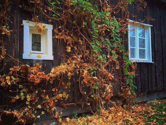 Herbst - Spreewald Fotografie Wendland