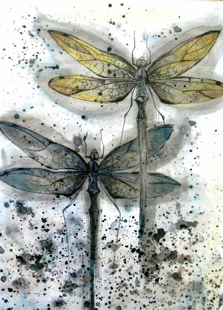 Dragonflies, by Amanda Colville.