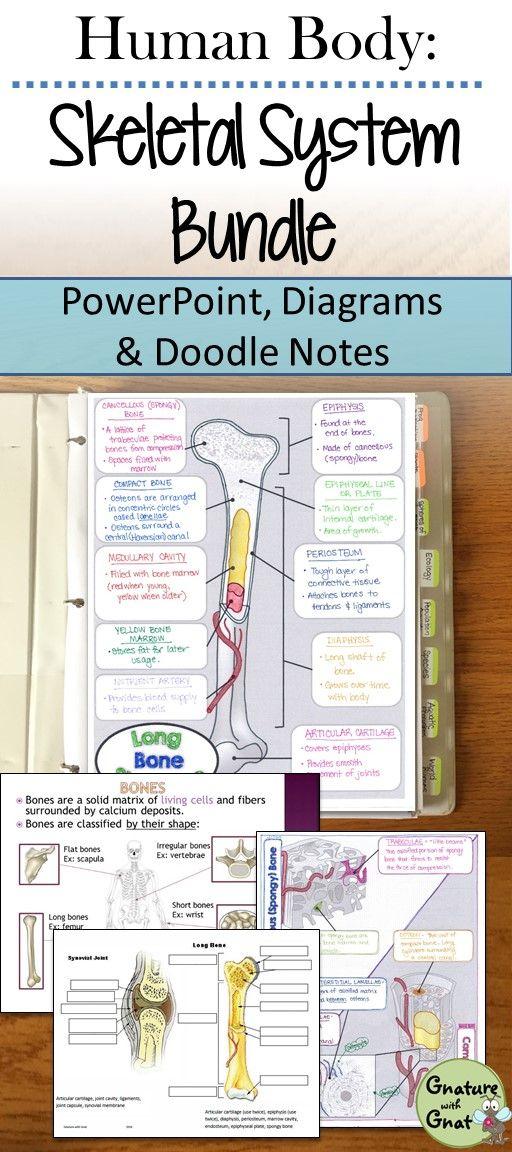 Skeletal System Unit  Ppt  Illustrated Notes  Diagrams