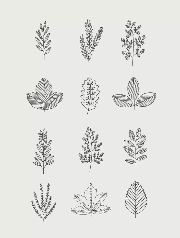 30 Ways to Draw Plants & Leaves – Shihori Obata: Abstract Artist & Creative Blogger