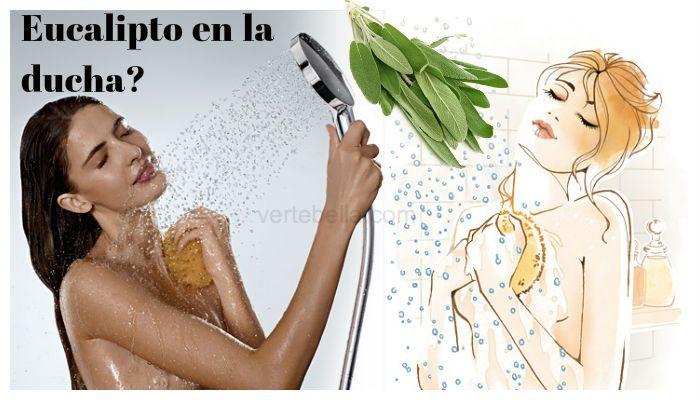 Hojas de eucalipto en la ducha? Conoce sus beneficios!