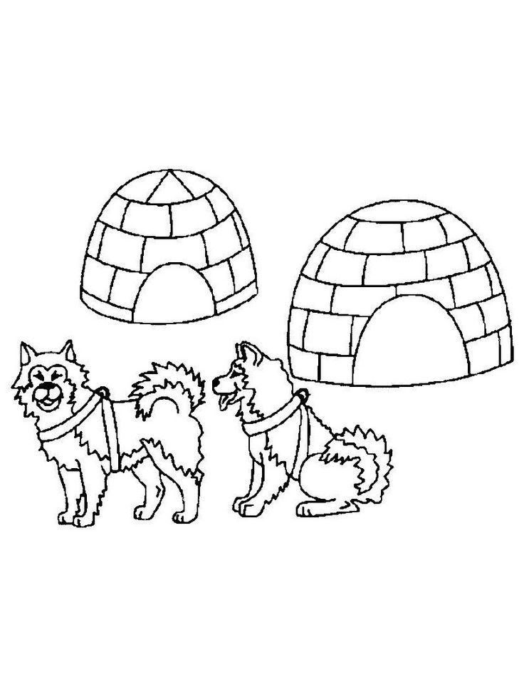 husky en iglo  Poolgebieden Kleurplaten  Pinterest  Husky
