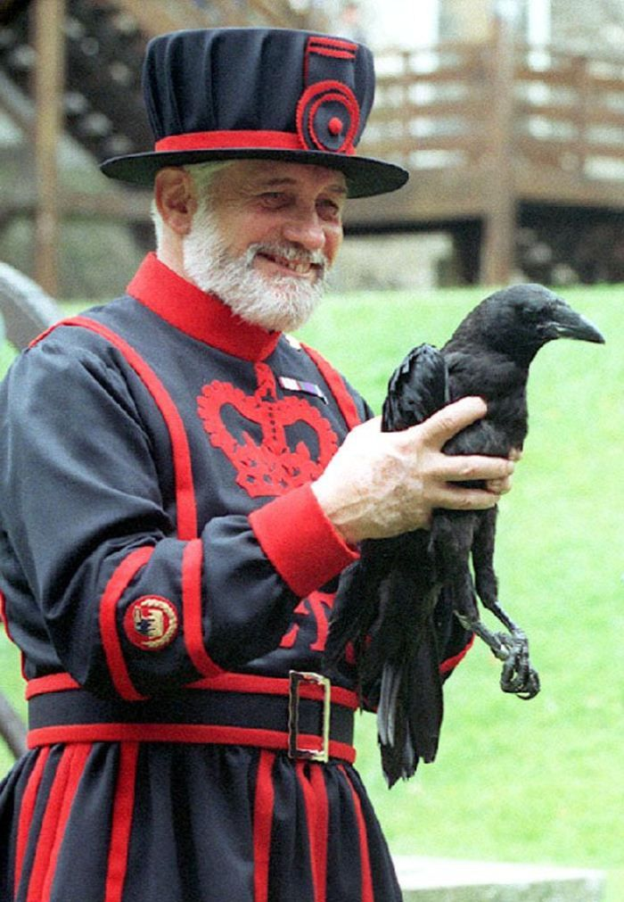 A Beefeater with a Raven at the Tower of London.  Legend says that the kingdom and the Tower will fall if the six resident ravens ever leave the fortress. According to the stories, it was Charles II who first insisted that the ravens of the Tower should be protected.