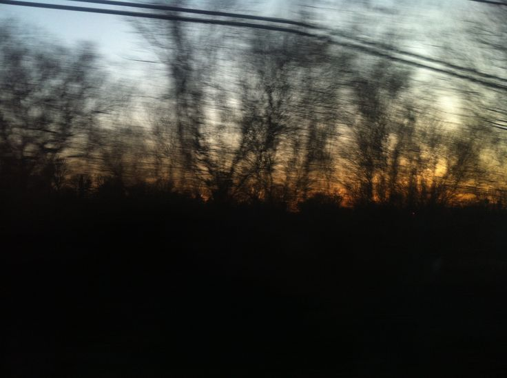 winter trees from a train