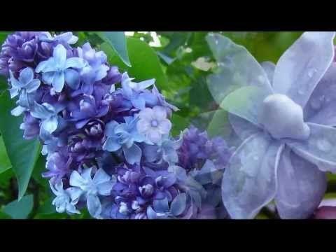 Мой синий сад - YouTube