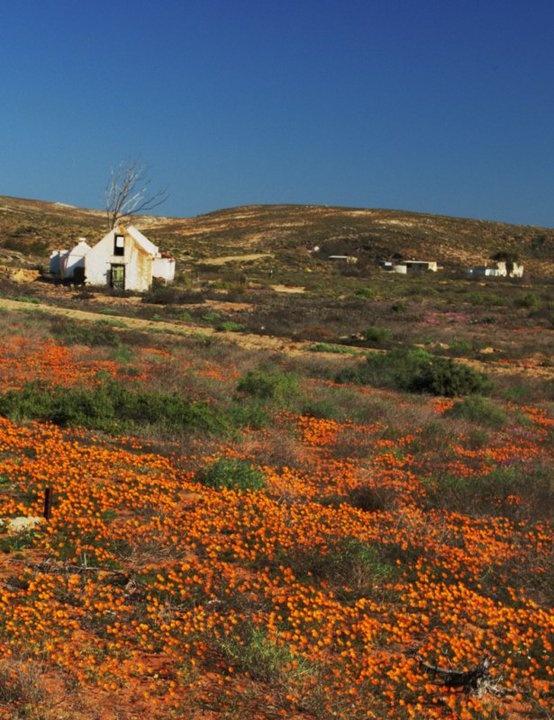 Photo Robert Meintjies Namaqualand