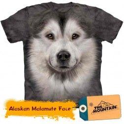 Alaskan Malamute Face - Dogs