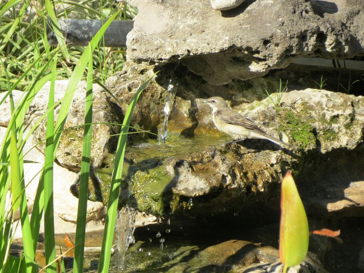 Bird enjoying our pond