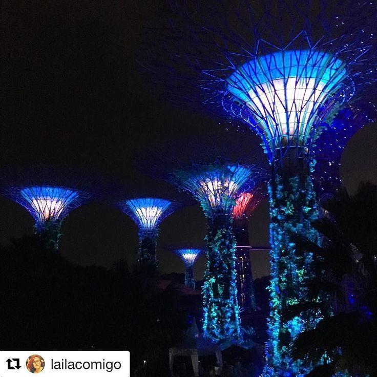 Use #letsflyawaybr e apareça no nosso feed! Obrigada @lailacomigo por compartilhar essa imagem! Excelente imagem de Singapura e as famosas árvores artificiais. --------- Use #letsflyawaybr and show up in our feed! Thank you  @ lailacomigo for sharing this image! Excellent image of Singapore and its famous artificial trees. -------- #repost #singapura #singapore #viagem #trip #travel #viaje #instatravel  #travelgram #igtravel #beautifulplace #traveladdict #traveltheworld #travelphotography…