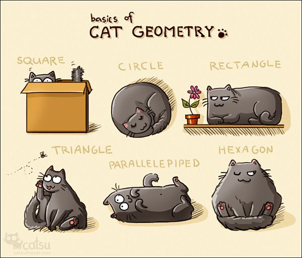 ¡El gato geométrico! | Matemolivares