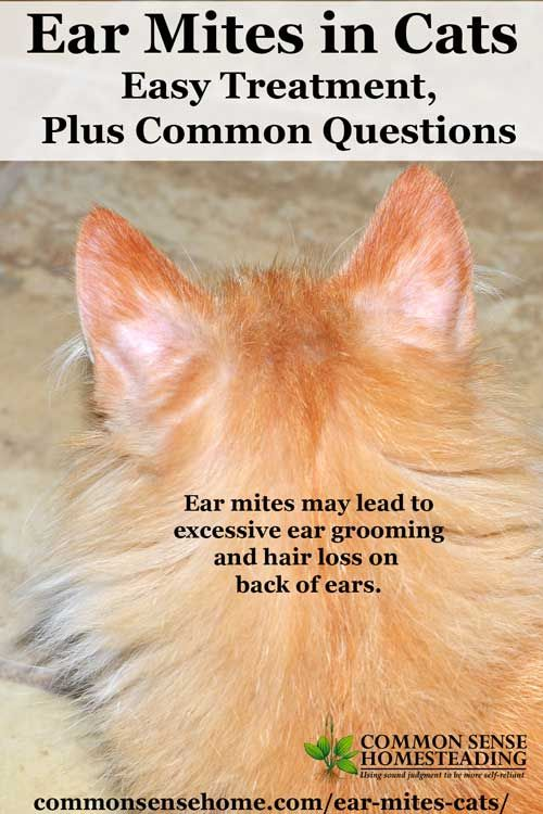 25+ best ideas about Cat ear mites on Pinterest | Dog ear ... Ear Mites In Cats