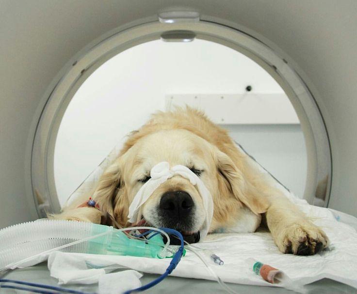 Mejores 11 imágenes de Radiologia Veterinaria en Pinterest ...